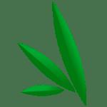 florida medical marijuana doctors locations